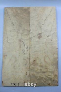7723-1 5a Barky Spalted Golden Camphor Wood Burl Les Paul Guitar Top Set Luthier